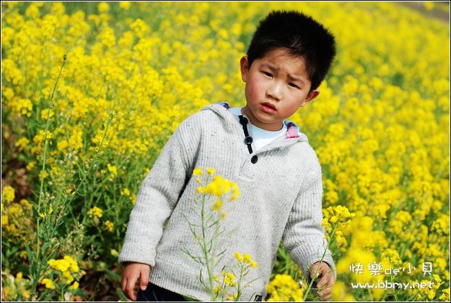 查看金东浩游新海公园之油菜花照片
